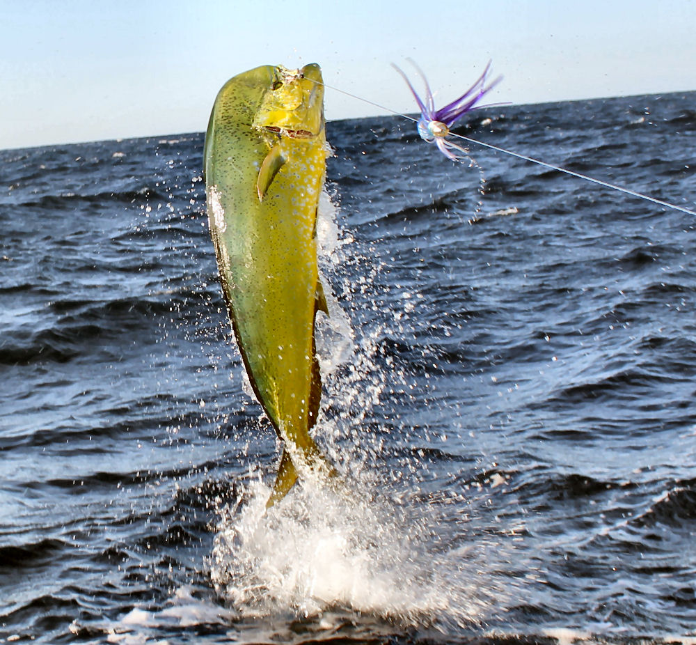 South Carolina Gps Fishing Spots